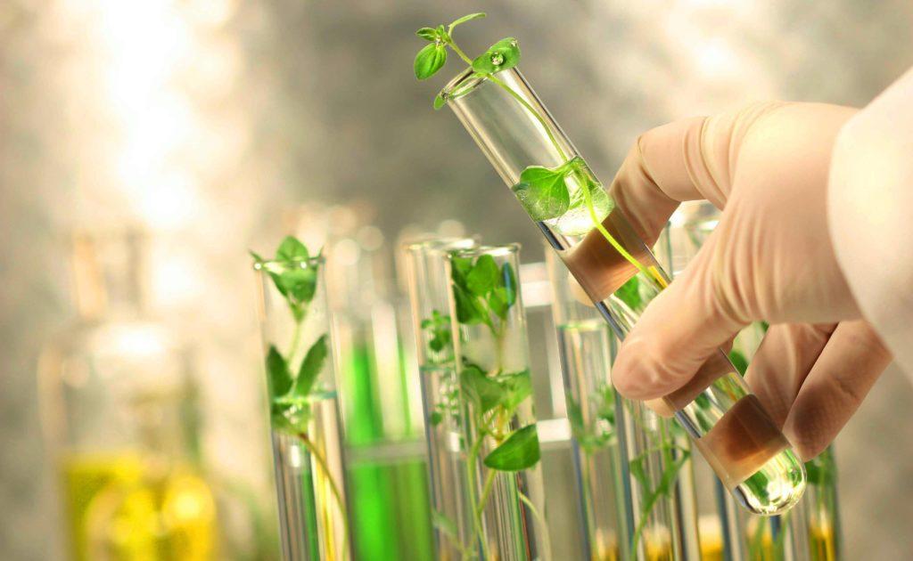 Экологические риски и гмо