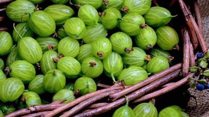Плоды крыжовника и его лечебные свойства