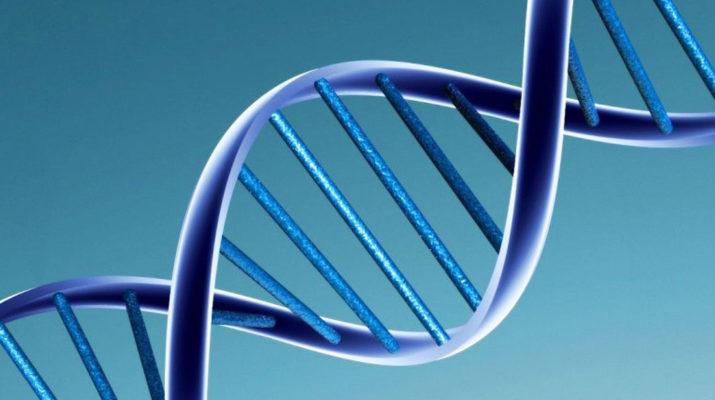 Работа в клетке — днк, рнк, рибосома и и вич вирус