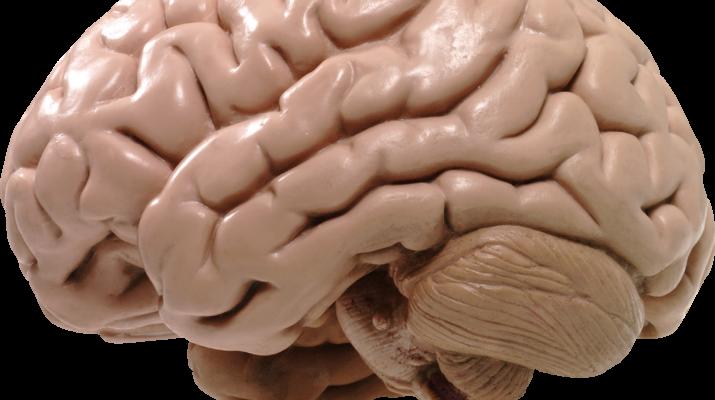 Защитить ваш мозг от старения