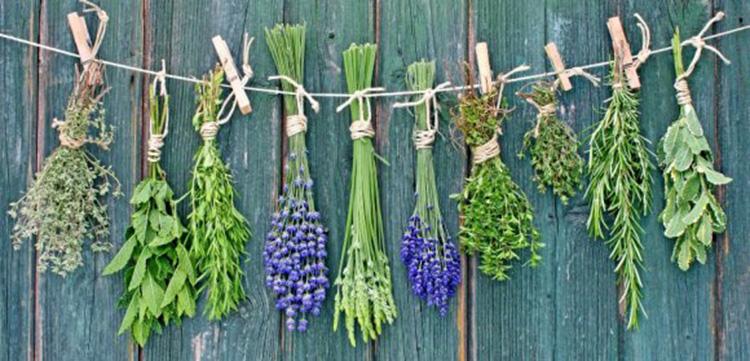 Растения укрепляющие иммунитет