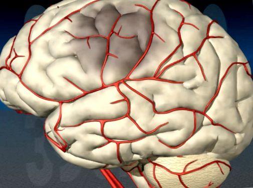 Улучшение мозгового кровообращения питанием
