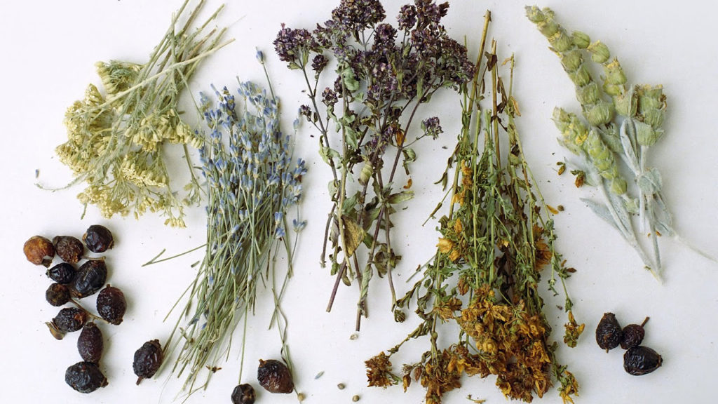 Травы для облегчения дыхания